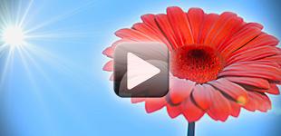 Animation: Adelie Sun - Sun powered LED lighting
